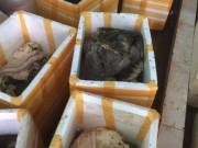 """Bắt quả tang cơ sở chế biến  """" chui """"  gần 900 kg nội tạng động vật bẩn"""