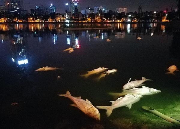 Hơn 40 công nhân xuyên đêm vớt cá chết ở hồ Hoàng Cầu - 1