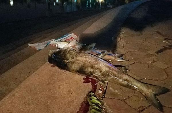 Hơn 40 công nhân xuyên đêm vớt cá chết ở hồ Hoàng Cầu - 2