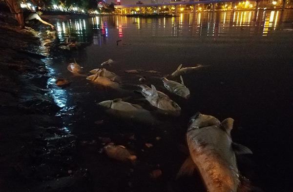 Hơn 40 công nhân xuyên đêm vớt cá chết ở hồ Hoàng Cầu - 7