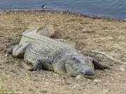 Thế giới - Cô gái Ấn Độ bị cá sấu bắt đi biệt tăm trước mặt gia đình