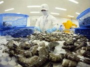 Thị trường - Tiêu dùng - Australia nới lỏng lệnh tạm ngừng nhập khẩu tôm