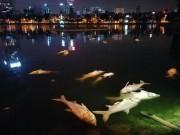 Tin tức trong ngày - Đã tìm ra nguyên nhân cá chết trắng ở hồ Hoàng Cầu