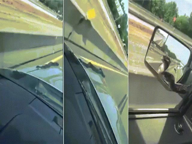 """Video: Rắn khủng """"bám"""" nóc capô dọa người trên cao tốc"""