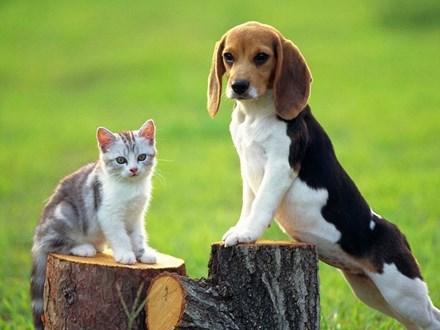 Chó mèo đã bị dại nếu có những biểu hiện sau đây - 1