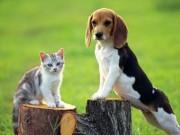 Sức khỏe đời sống - Chó mèo đã bị dại nếu có những biểu hiện sau đây