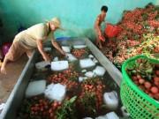 Thị trường - Tiêu dùng - Trung Quốc sẽ mua 40.000 tấn vải Bắc Giang