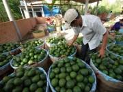 Thị trường - Tiêu dùng - Cam sành nghịch mùa rớt giá, rụng đầy vườn