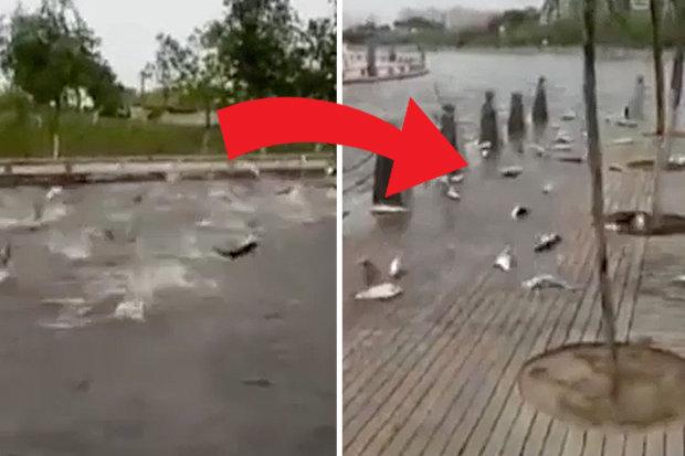 Video: Hàng trăm con cá bỗng nhiên nhảy lên bờ tự sát ở TQ - 1