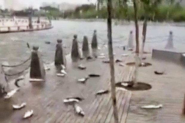 Video: Hàng trăm con cá bỗng nhiên nhảy lên bờ tự sát ở TQ - 2
