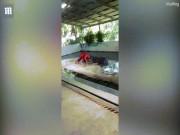 """Thế giới - Thái Lan: Huấn luyện viên bị cá sấu """"nhai đầu"""" khi diễn"""