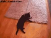 Ảnh động: Bó tay với đám mèo lười biếng