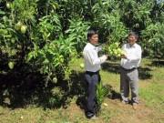 Thị trường - Tiêu dùng - Mùa thu hoạch trái cây và điệp khúc: trồng - chặt - trồng...