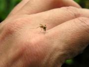 Sức khỏe đời sống - 10 người tử vong vì sốt xuất huyết