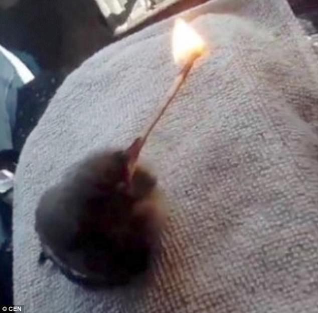 Phẫn nộ thiếu niên Nga bắt chim sẻ non hút thuốc - 2