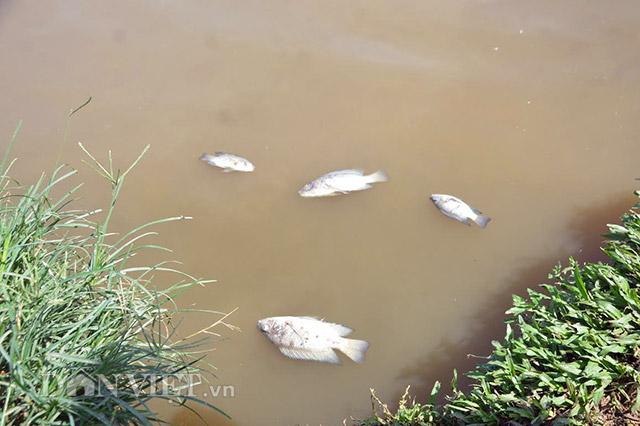 Quảng Nam: Rụng rời chân tay vì cá, vịt bất ngờ lăn ra chết - 3