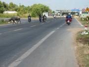 Tin tức trong ngày - Ba thanh niên tấn công CSGT, cướp xe vi phạm bị khởi tố