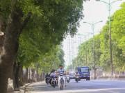 Chủ tịch Nguyễn Đức Chung: HN rất cân nhắc chặt hạ cây xanh
