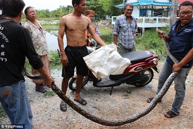 Thái Lan: Bố phát hiện trăn khổng lồ, sợ con bị ăn thịt - 3
