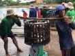 Thị trường - Tiêu dùng - Cá tra xuất khẩu vẫn gặp khó