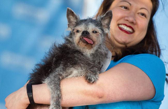 Chú chó giật giải 34 triệu nhờ vẻ... xấu nhất thế giới - 4