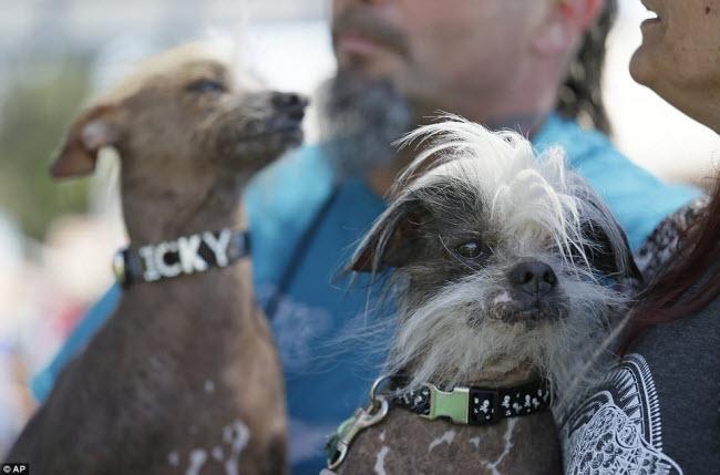 Chú chó giật giải 34 triệu nhờ vẻ... xấu nhất thế giới - 8
