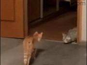 Ảnh động: Cười sặc sụa với lũ mèo nghịch ngợm