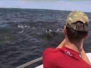 """Mỹ: Cá voi to như tàu ngầm lao lên  """" uy hiếp """"  tàu chở khách"""
