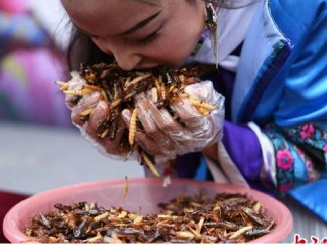 Nhận được thỏi vàng sau khi nuốt trọn 1,23 kg côn trùng
