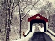 Du lịch - Lý giải bí ẩn rợn người về cây cầu than khóc trong đêm