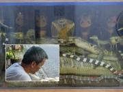 Vua rắn độc  kinh ngạc trước mãng xà 45kg trong bể rượu ở Hà Nội