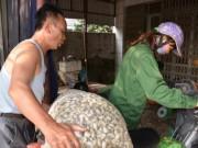 Thị trường - Tiêu dùng - Quảng Ninh: Người dân vừa nuôi ngao vừa... run!