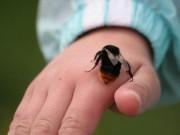 Sức khỏe đời sống - Cách 'giải độc' bị côn trùng cắn, đi du lịch nên biết
