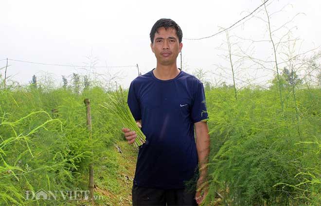 """""""Nể phục"""" thầy giáo xứ Nghệ về vườn trồng cây tiền tỷ măng tây - 2"""
