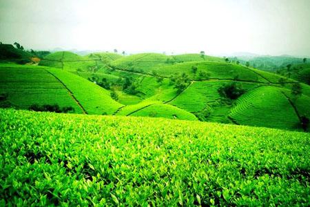 Những thiên đường xanh ngát xanh không thể bỏ qua khi đến Thái Nguyên - 2