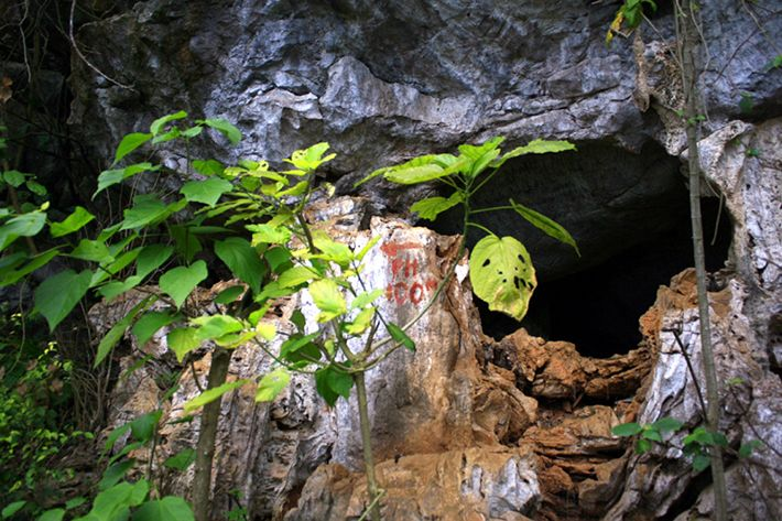 Những thiên đường xanh ngát xanh không thể bỏ qua khi đến Thái Nguyên - 4