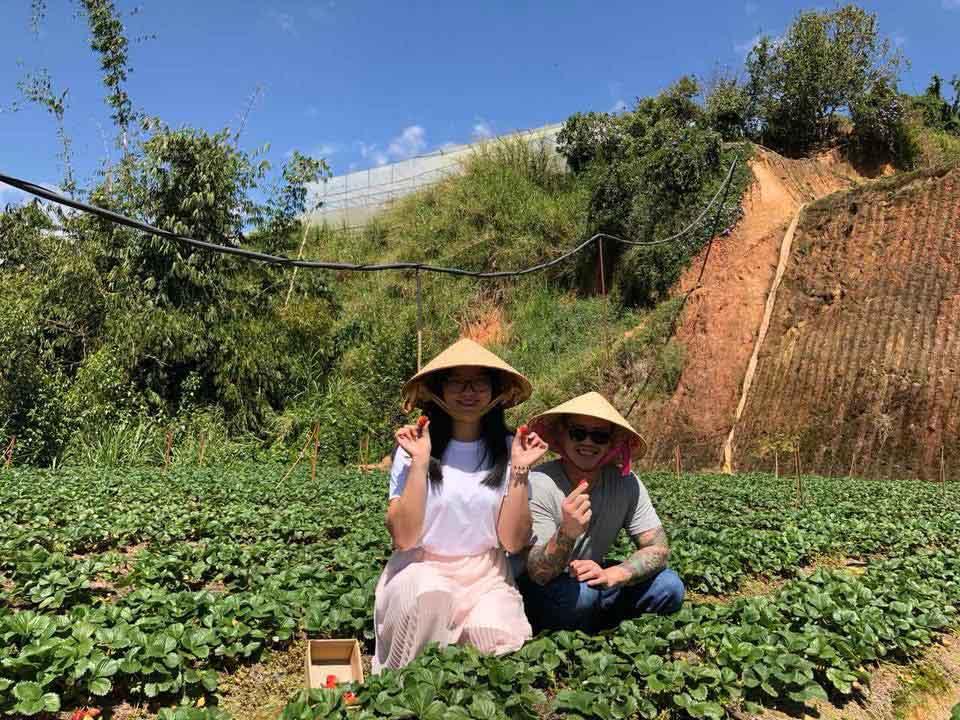 Lên Đà Lạt một ngày làm nông dân thu hoạch dâu tây - 6