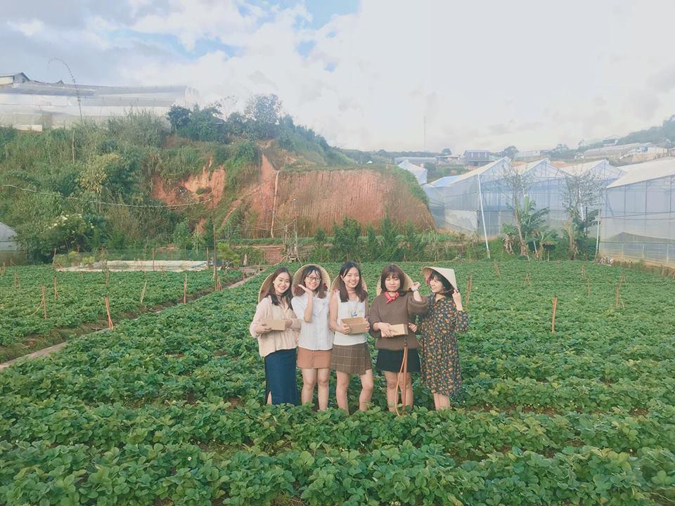 Lên Đà Lạt một ngày làm nông dân thu hoạch dâu tây - 9