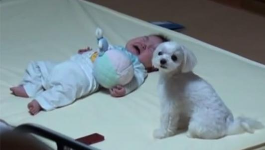 Clip: Phản ứng đáng yêu của chó cưng khi thấy bé khóc