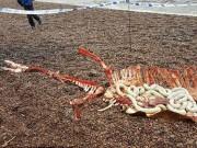 Thế giới - Phát hiện xác quái vật hồ Loch Ness?