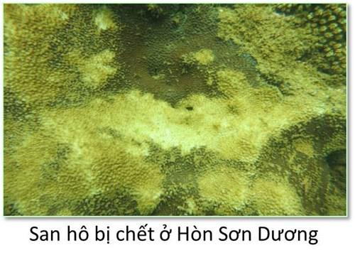 Bộ ảnh đáy biển miền Trung bị hủy diệt khiến ai cũng xót xa - 2