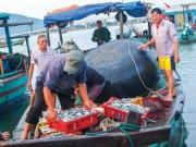 Tin tức trong ngày - Formosa xả thải: Biển Bắc Trung bộ an toàn đến đâu?