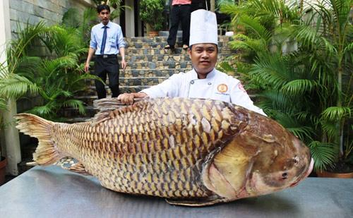 """Cá hô nặng gần 130kg """"bơi"""" từ Biển Hồ về Sài Gòn"""