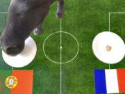 Bóng đá - Cập nhật chung kết Euro 10/7: Mèo tiên tri chọn Bồ Đào Nha