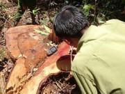 Tin tức trong ngày - Khám nghiệm hiện trường vụ phá rừng quy mô lớn