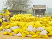 Thị trường - Tiêu dùng - Xuất khẩu gạo giảm mạnh