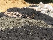 """Tin tức trong ngày - """"Sở TN-MT Hà Tĩnh đang xử lý rất tốt vụ chất thải Formosa"""""""