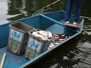 Tin tức trong ngày - Hà Nội: Cá chết bất thường, nổi trắng hồ Thiền Quang