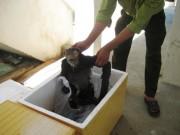 Tin tức trong ngày - Phát hiện 9 con voọc chà vá chân đen bị nứt sọ, sấy khô