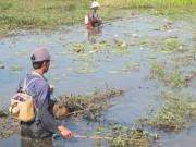 Tin tức trong ngày - Vượt biên bắt cá, 3 người bị bắn thương vong